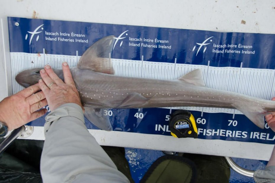 Shark tope weight formula