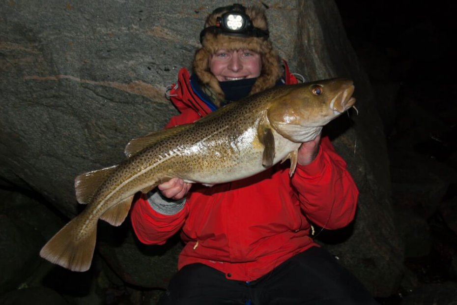 Norwegian shore caught cod