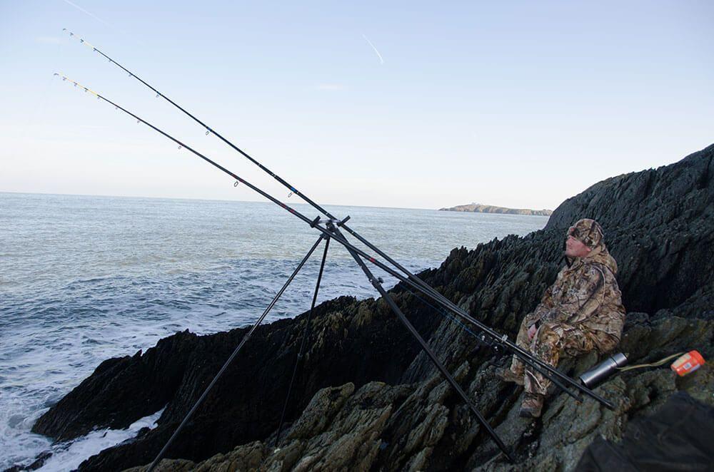 Shore rough ground cod