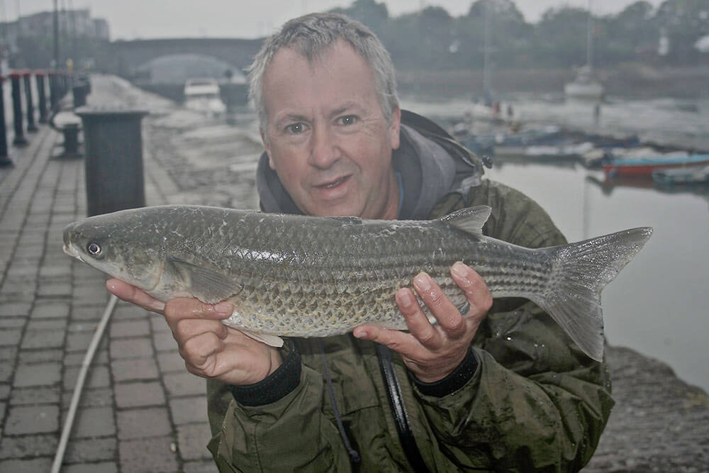 5 lb plus mullet caught on a morning of Irish mist.