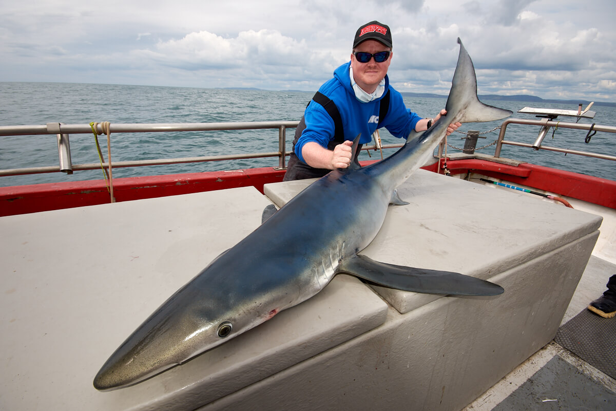 Holding a blue shark