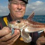 Gurnard Fishing