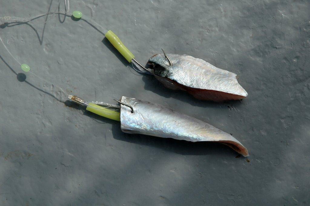 Fish strips for haddock