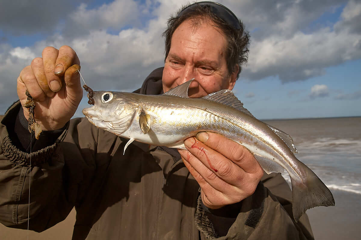How to catch whiting